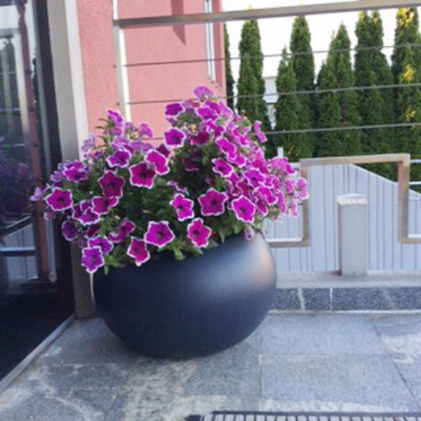 Pflanztopf Swing low anthrazit, bepflanzt, Kunststoff