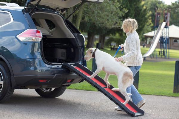 Hunderampe faltbar für ältere Hunde