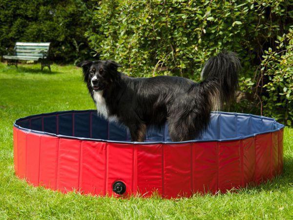 Hundepool, Planschbecken für Tiere